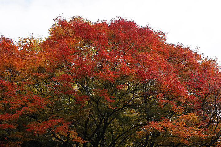 2010-11-20_10-02-53.jpg